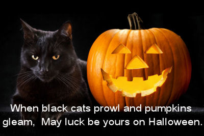 Black cats and pumpkin quote