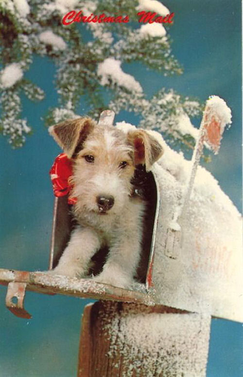 Fox Terrier in a mail box. How cute is this?