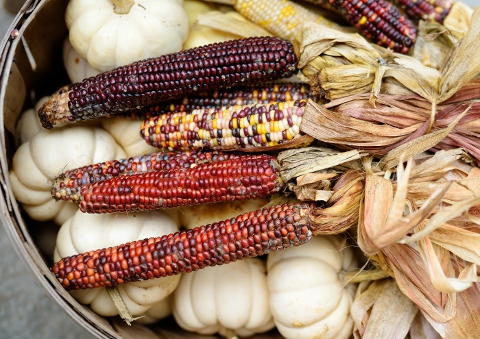 Ears of Indian corn in a basket with garlic.
