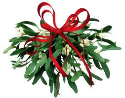 A bunch of mistletoe also known as the kissing plant with a red ribbon at the top.