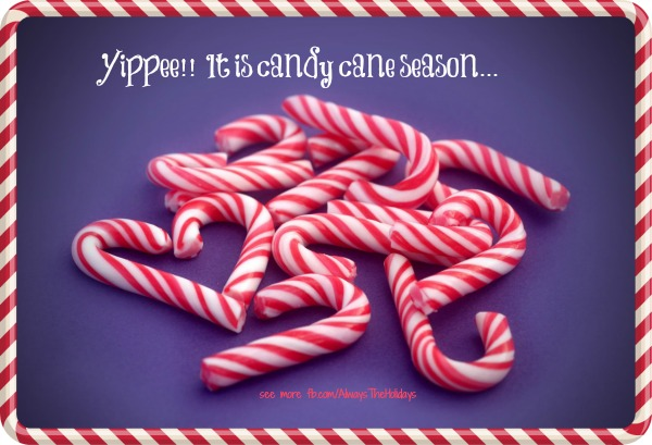 Yippee! It's Candy Cane Season - see more Holiday graphics https://alwaystheholidays.com/christmas-quotes-and-graphics/