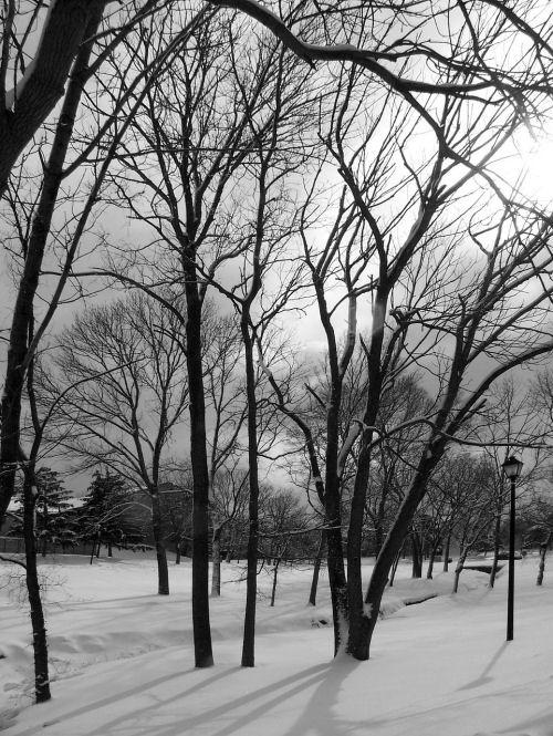 Winter scene at dawn