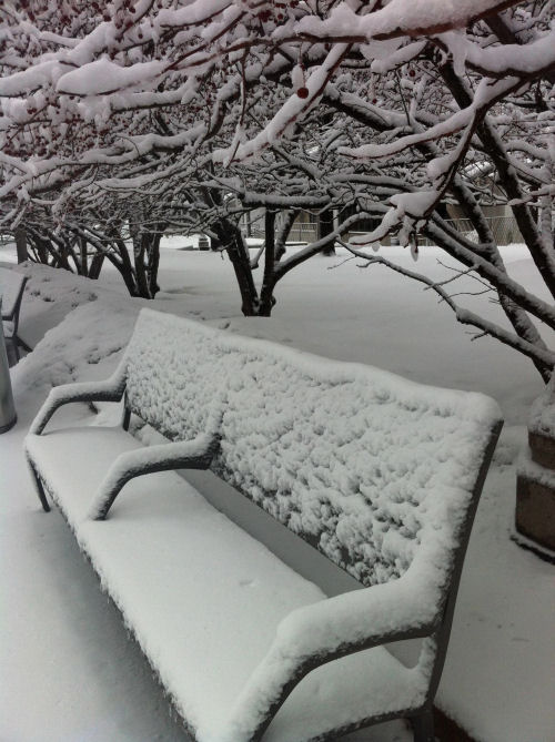 Snow on a park bench under a tree covered in snow.