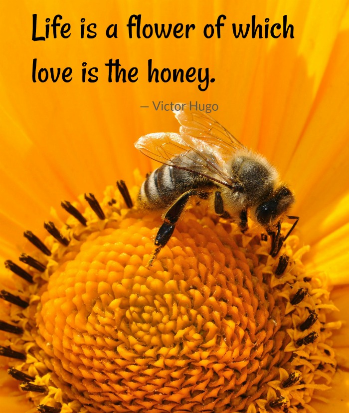Life is a flower of which love is the honey love quote