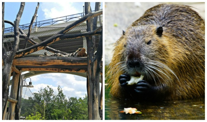 Zoo lovers National Day and International Beaver Day
