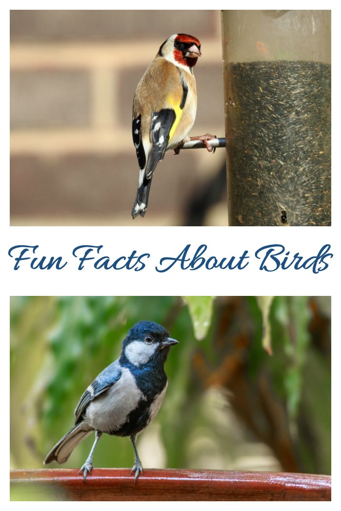 Get some fun facts about birds and ways to enjoy bird watching.