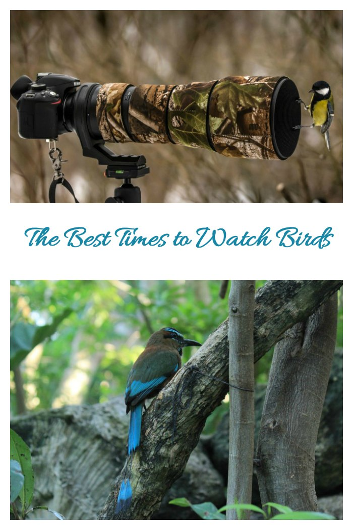 Best times to watch birds. See birds when they are active.