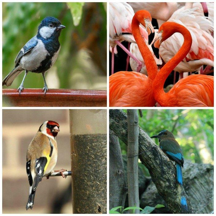 Go Birding Day