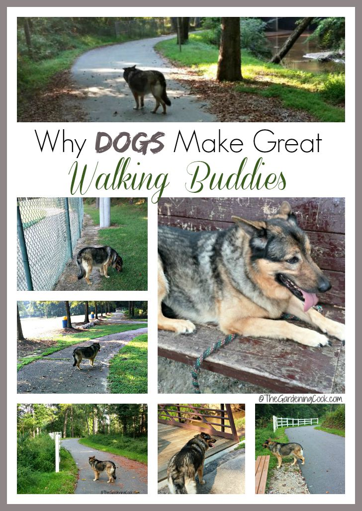 Dogs make good walking buddies
