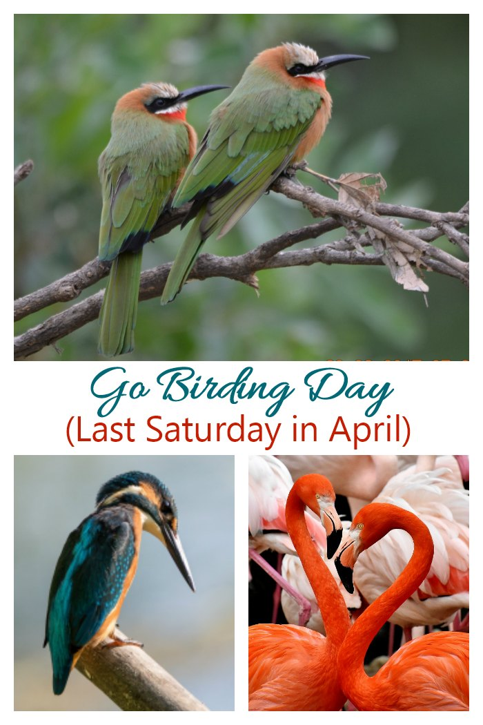 The last Saturday in April is Go Birding Day. Get some fun Facts, tips for watching birds and ways to celebrate on Always the Holidays