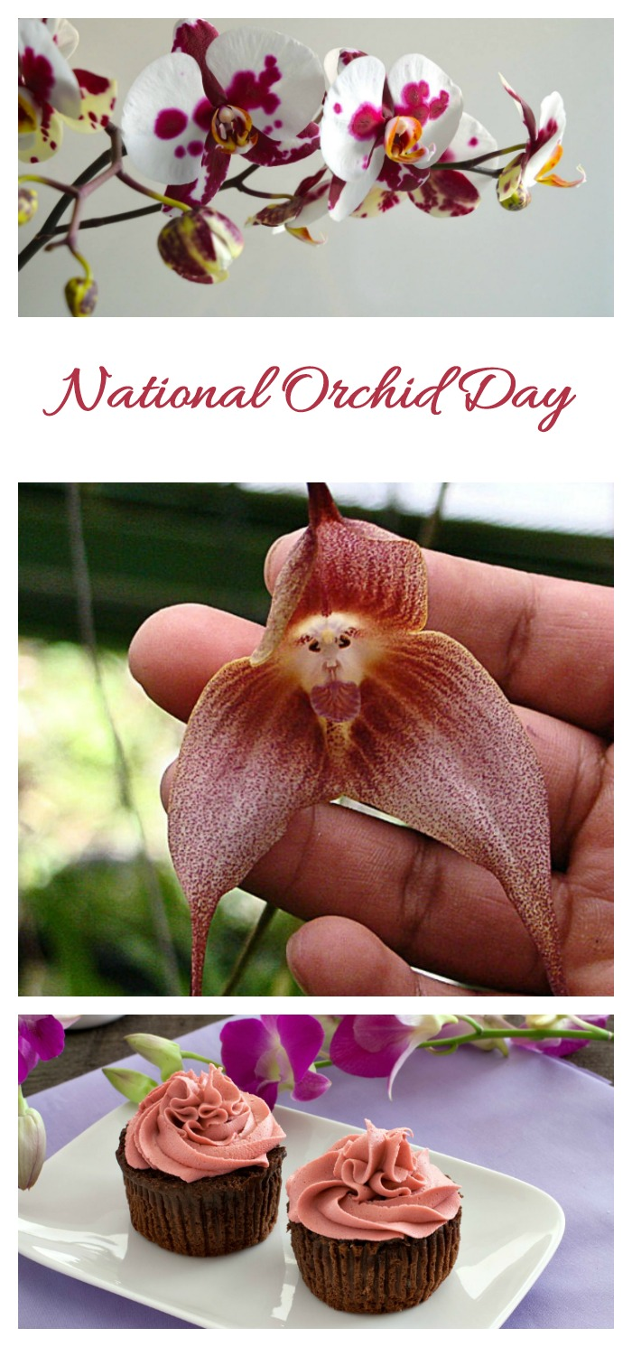 Celebrate National Orchid Day (and National Orchid Month) with pictures of orchids, fun facts and activities.