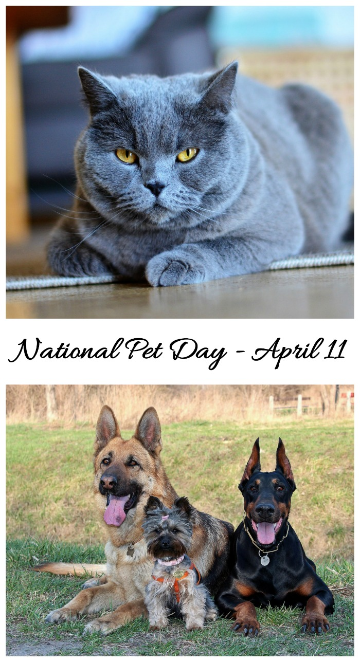 National Pet Day is April 11. Time to show your furry friends some extra love. Find out about this day and how to celebrate it on Always the Holidays.