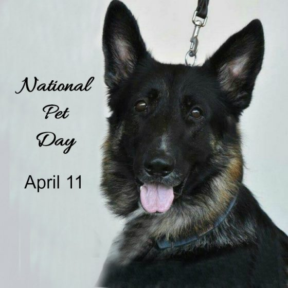 National Pet Day is April 11