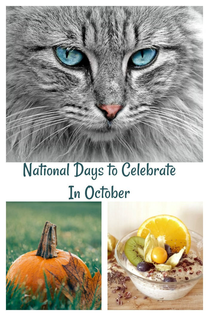 National Days to Celebrate i October, Cat Pumpkin and oatmeal