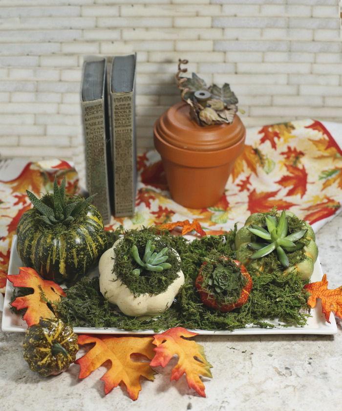 Mini Pumpkin Planters For Succulents Fall Decor National