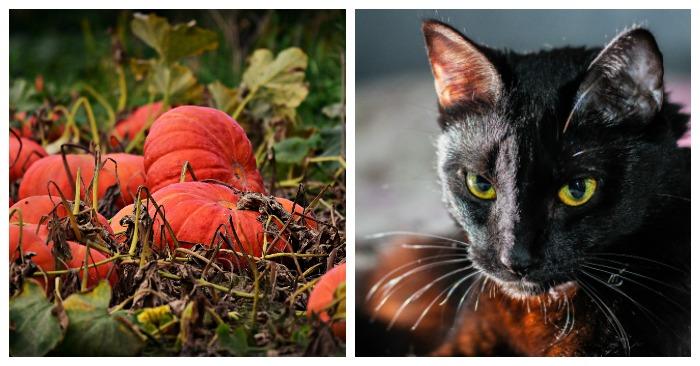 List Of National Days In October Apples Pumpkin Carving Halloween