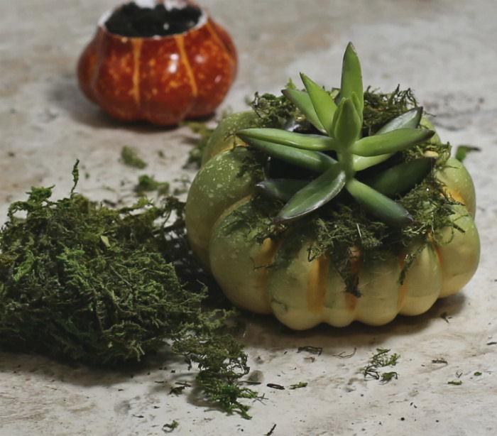 Mini pumpkin planter with succulent