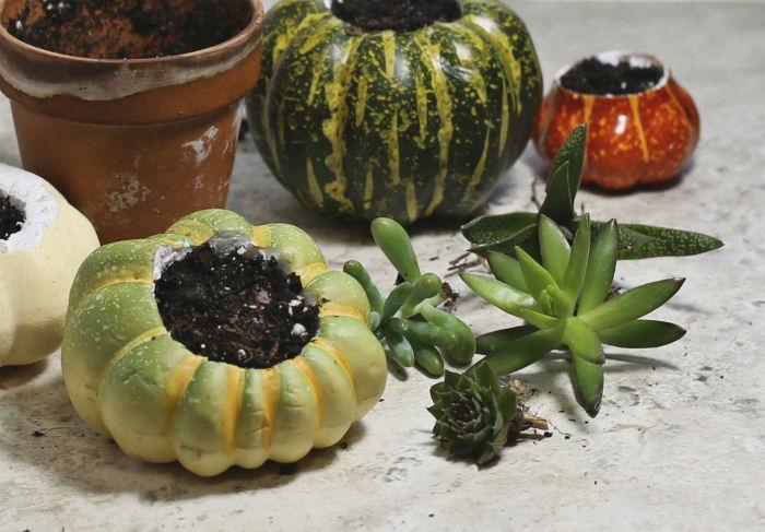 Adding soil to pumpkin planters