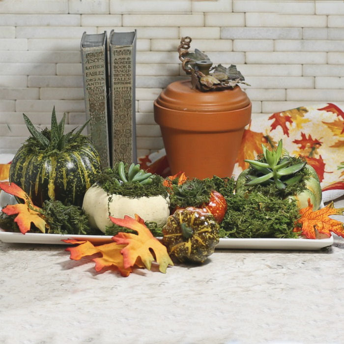 Mini pumpkin planter vignette