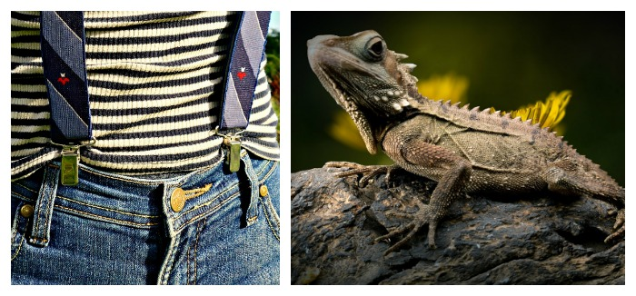 Suspenders and reptile
