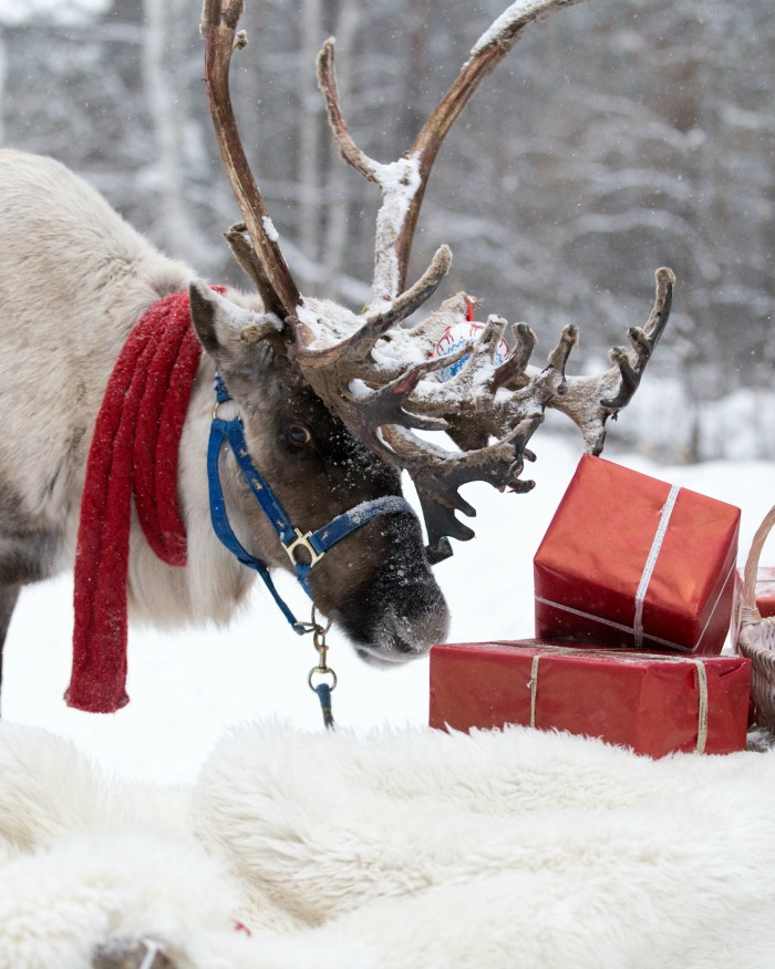 Reindeer in snow near some presents
