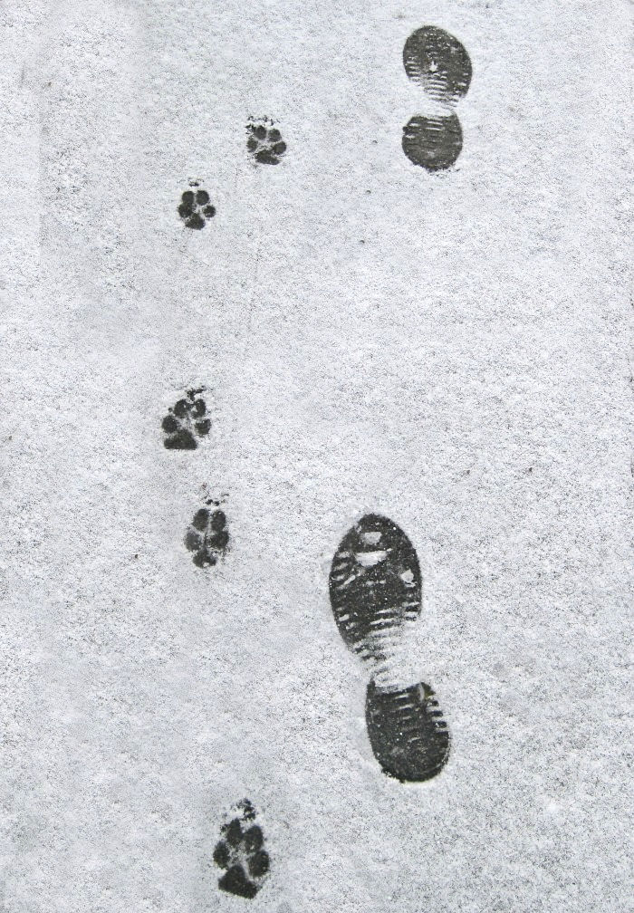 Footprints in the snow of Santa Claus and his reindeer.