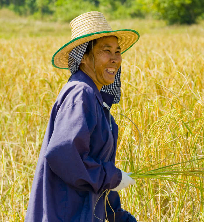 Chinese woman in straw hat in a rice field.