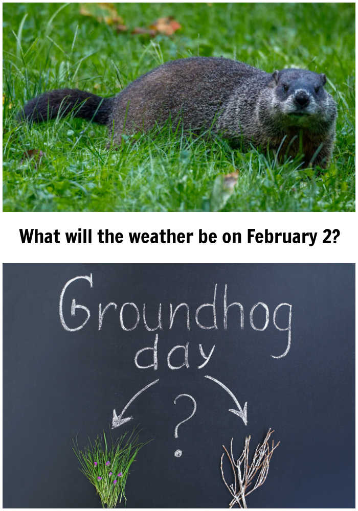 Groundhog in sun and chalkboard with Groundhog Day images and text reading What will the weather be on February 2?