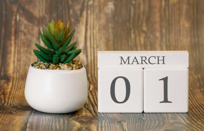 Succulent in a white pot with March 01 calendar.