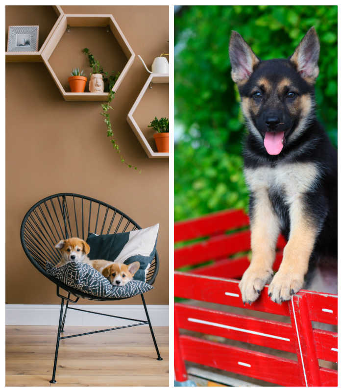 March national days feature puppies in a chair and a little red wagon.