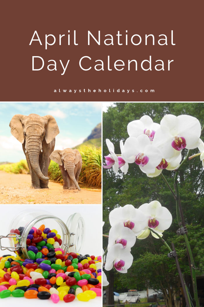 Elephants, orchids and jolly beans with text reading April National Day Calendar.