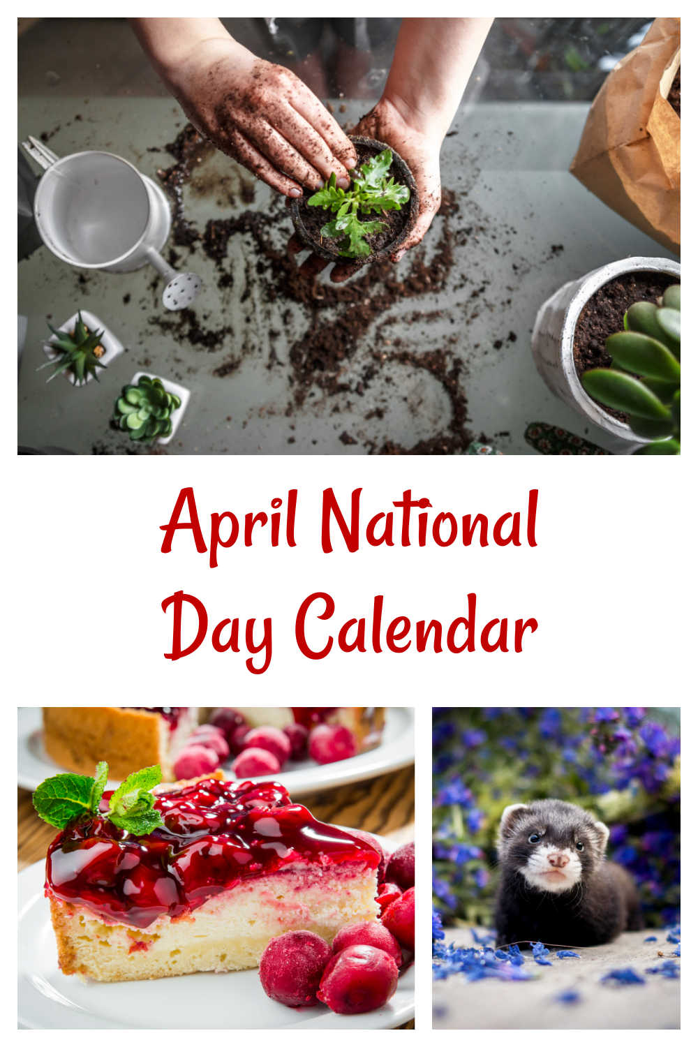 Gardeening, cherry cheesecake and baby ferret with words reading April National Day Calendar