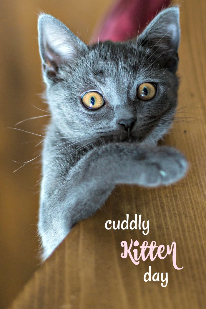 Cuddly Kitten Day is celebrated on March 23