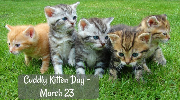 Cuddly Kitten day is March 23
