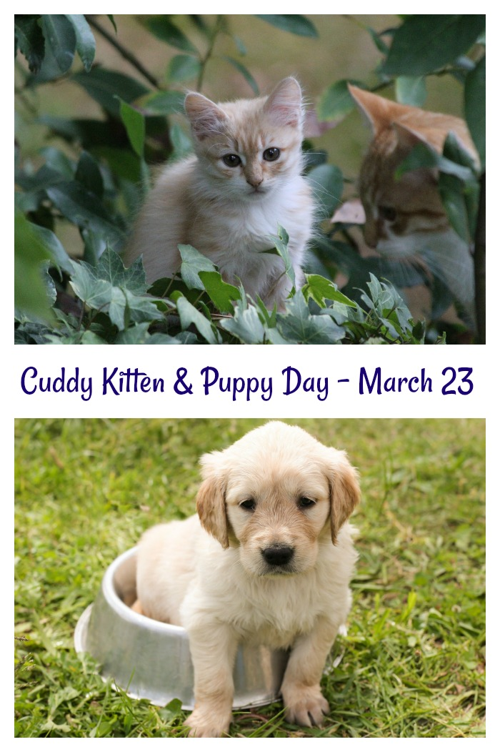 cuddly Kitten and National Puppy Day are celebrated on March 23