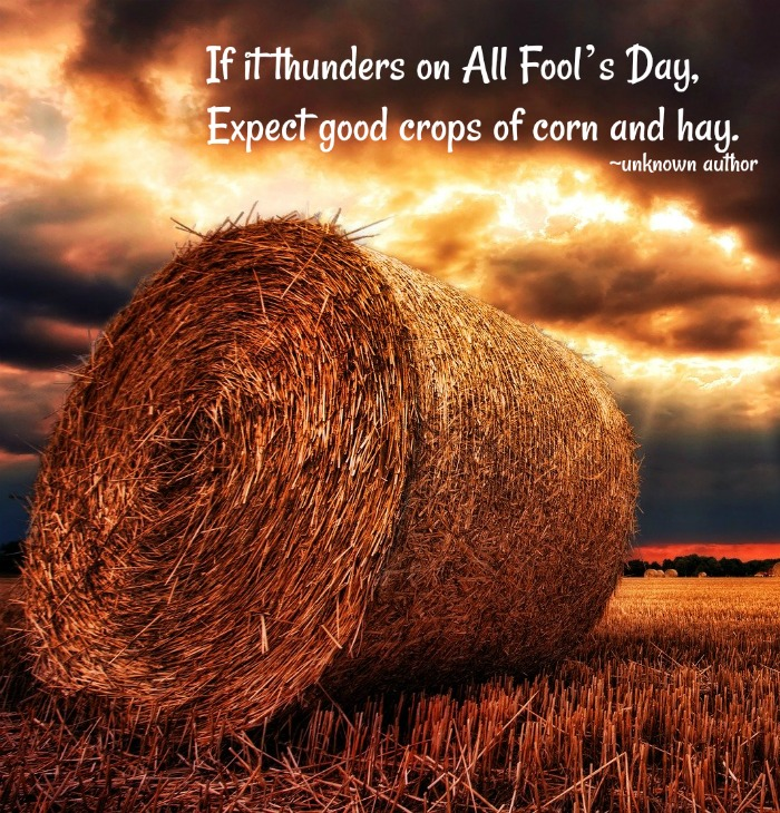 A bale of hay in a field at sunset with a text overlay of a corn and hay quote for All Fool's Day.