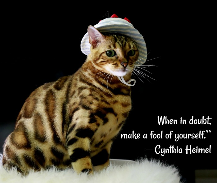 A cat with leopard spots and a bonnet on with a silly cat quote overlay.