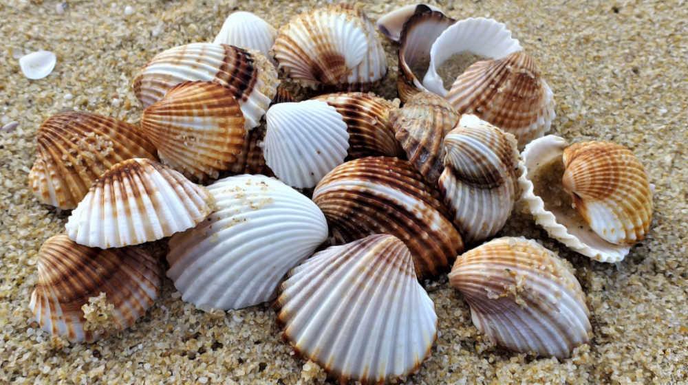 Seashells piled on the beach.