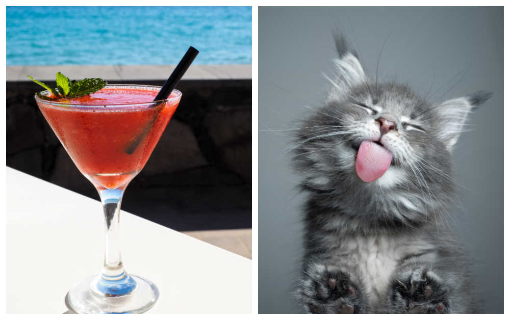 Strawberry daquiri and cat with tongue out in a collage.