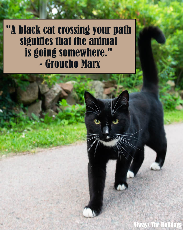 black cat saying - A black cat crossing your path signifies that the animal is going somewhere.