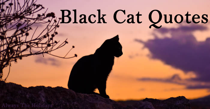 black cat quotes