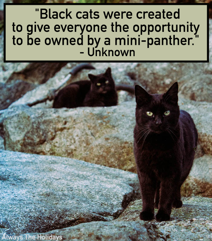 Black cats quote: Black cats were created to give everyone the opportunity to be owned by a mini panther.