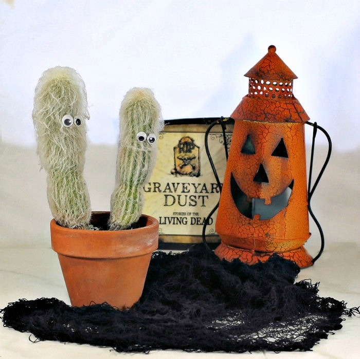 Old man cactus in a Halloween scene