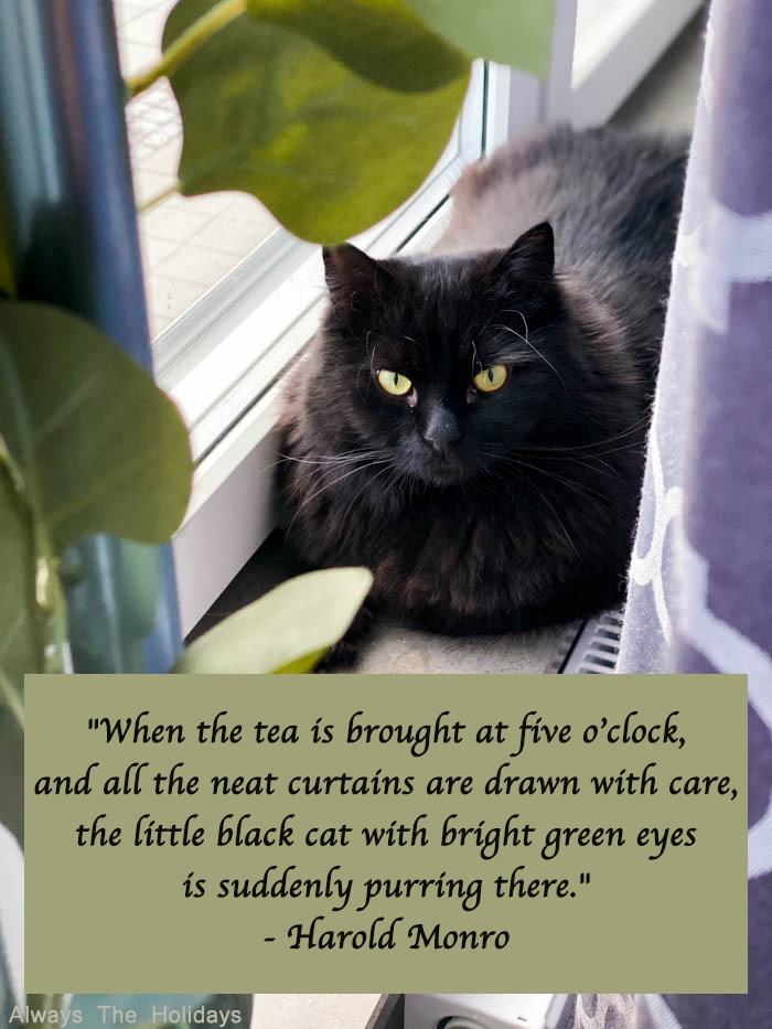 Black cat quote about tea being served at 5 o'clock.