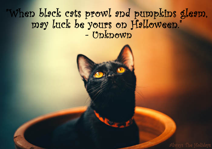 Black cat message - When black cat prowl and pumpkins gleam, may luck be yours on Halloween.
