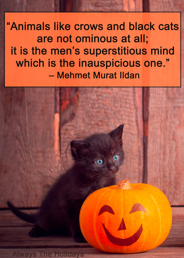 A black kitten playing with a decorated Halloween pumpkin with a Halloween cat quote overlay.