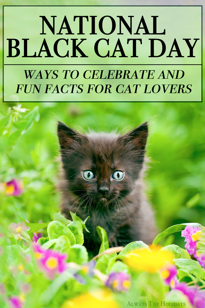 A black kitten in a field of flowers with a text overlay to celebrate National Black Cat Day.