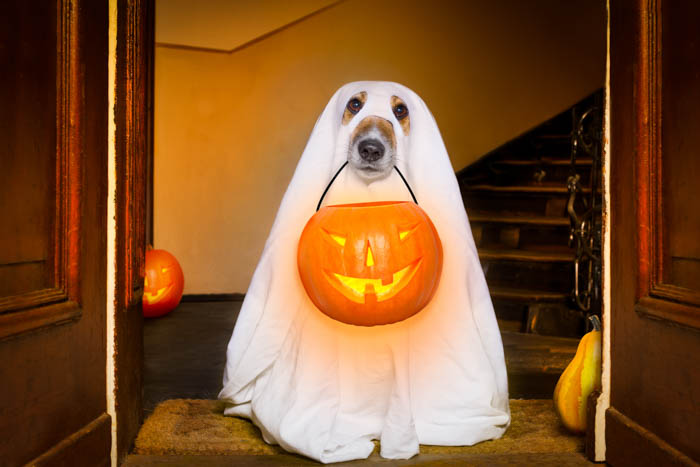 Dog dressed as a ghost holding a Halloween trick-or-treating basket.