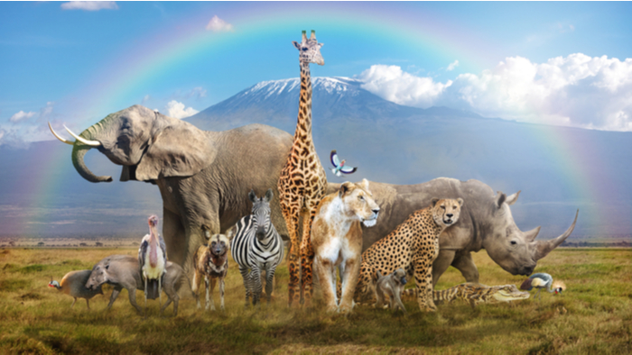 A herd of exotic animals standing in a desert under a rainbow, including but not limited to an elephant, a giraffe, a lion, a tiger, a zebra, a butterfly, a rhino, and an emu.