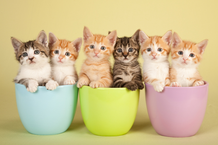 Six cute kittens in plant pots posing for a photo.